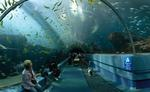 800px-Georgia_Aquarium_-_Ocean_Voyager_Tunnel_Jan_2006.jpg